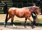 Goffs February Sale Up Across the Board