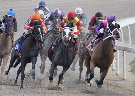Ladyzarbridge (right)  with Rosie Napravnik aboard leads the pack into the stretch and goes on to win the 23rd running of the $100,000 Louisiana Champions Day Ladies at Fair Grounds Race Course & Slots.