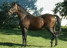 Grade III Winning Stallion Shotiche Dies