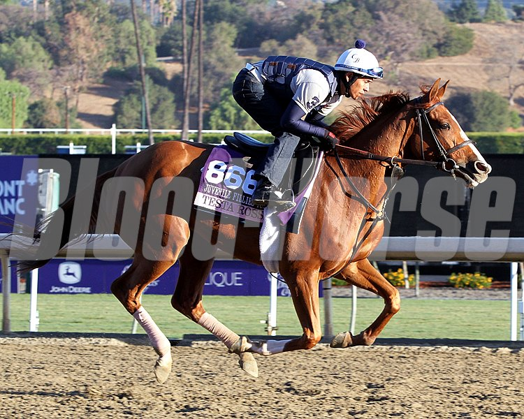 Testa Rossi on the track at Santa Anita on October 30, 2013. Photo By: Chad B. Harmon