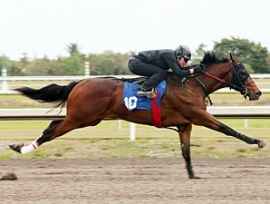Hot Prospects Adorn Fasig-Tipton Florida Sale