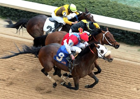 Cyber Secret wins the 54th running of The Razorback Handicap (gr. III) on 3/9/2013 for $150,000 at 1-1/16 Miles in 1:44.4.