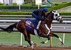 Fast Anna works towards the Breeders' Cup at Santa Anita Oct. 26, 2014.