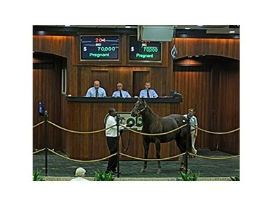 Hip 264, by Lion Heart, brought $70,000 dollars at the OBS Fall mixed sale.