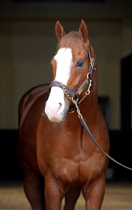 Highest price new stallion Will Take Charge at Three Chimneys Farm near Midway, Kentucky.