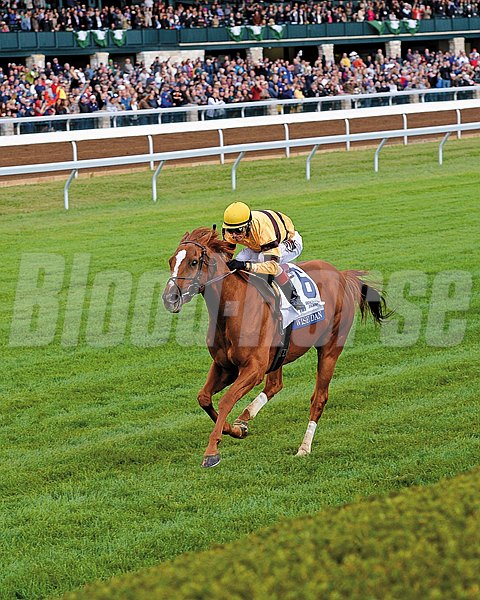 Wise Dan and jockey John Velazquez take the lead in the Shadwell Turf Mile.