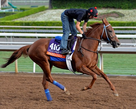 Parranda on Oct. 26, 2014, at Santa Anita in preparation for the Breeders' Cup.