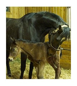 Rachel Alexandra and her 2013 Bernardini filly.