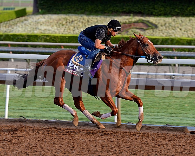 Sweet Swap on Oct. 26, 2014, at Santa Anita in preparation for the Breeders' Cup.