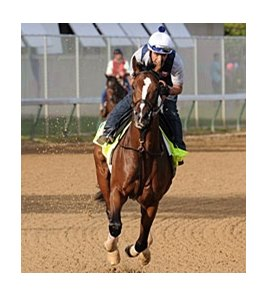 "Normandy Invasion on the track on May 2.<br><a target=""blank"" href=""http://photos.bloodhorse.com/TripleCrown/2013-Triple-Crown/Kentucky-Derby-Workouts/29026796_jvcnn8#!i=2489650307&k=28NGLvv"">Order This Photo</a>"