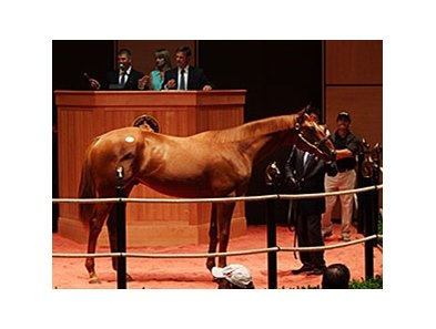 Hip 191, by Bellamy Road out of Affirmed Dancer sold for $420,000.