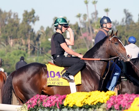Flat Out on the track at Santa Anita Park on October 30, 2013. Photo By: Chad B. Harmon