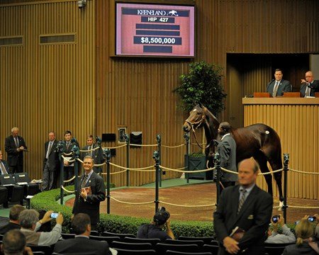Hip 427, Royal Delta, brings $8.5 million at the Keeneland Sales, November 8, 2011.