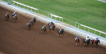 The Breeders' Cup field running down the stretch.