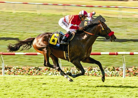 Acclamation and jockey Joel Rosario win the Grade I, $300,000 Eddie Read Stakes, Saturday, July 23, 2011 at Del Mar.