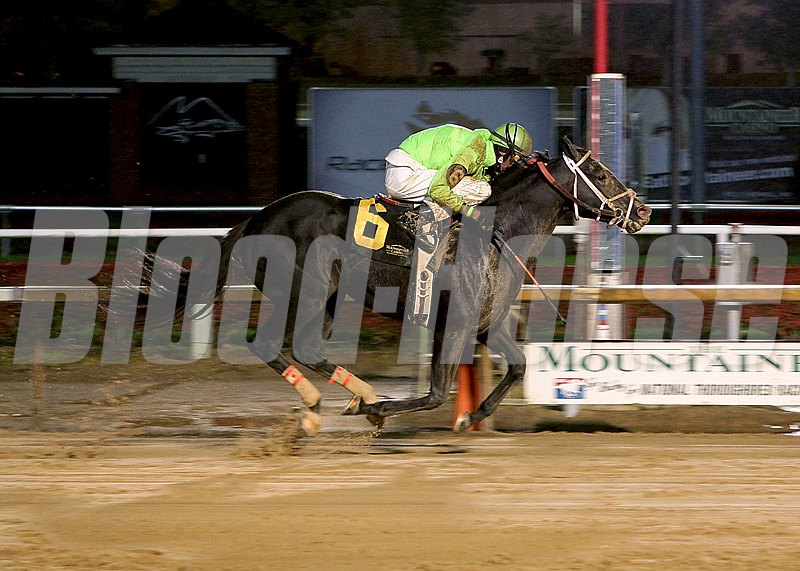 Voodoo Storm captures the 41st Running of the Mountaineer Mile Stakes at Mountaineer Racecourse in Chester, West Virginia.