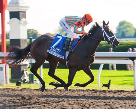 Grade I winner My Conquestadory is to be offered in foal to Tapit.