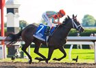 My Conquestadory winning the 2013 Darley Alcibiades Stakes (gr. I) at Keeneland.