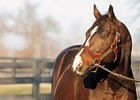 A P Indy<br>