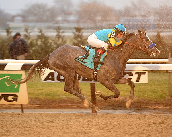 Despite bobbling at the start and racing wide on the first turn, favored El Kabeir posted an impressive 4 3/4-length victory in the $200,000 Grade III Jerome Stakes at rainy Aqueduct Racetrack.