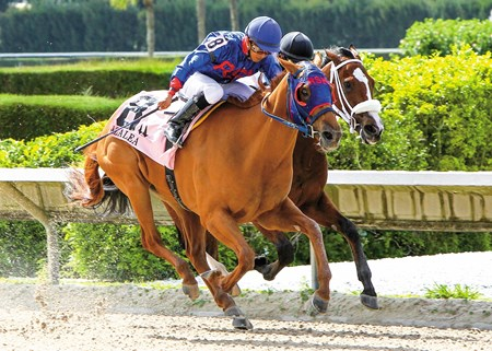 WildCat Lily takes the 38th Running of the Grade III Azalea Stakes at Calder Race Course in Miami Gardens, Florida.