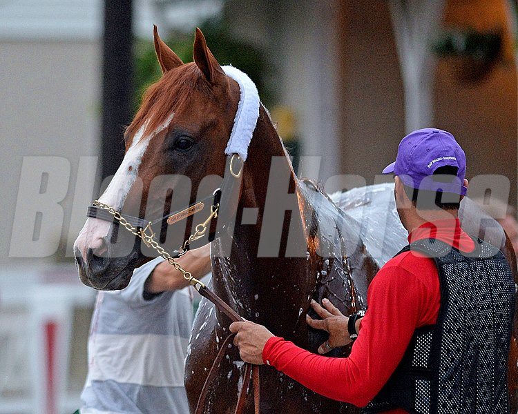 Caption: California Chrome