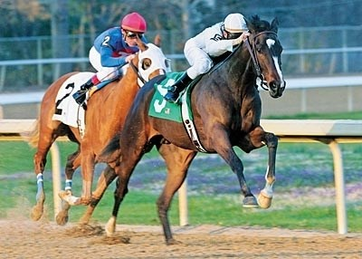 Leaping Lady: L and M Partners' Rachel Alexandra flies home by eight lengths in the Feb. 15 Martha Washington Stakes at Oaklawn.