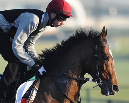 St Nicholas Abbey preps for the Dubai Sheema Classic.