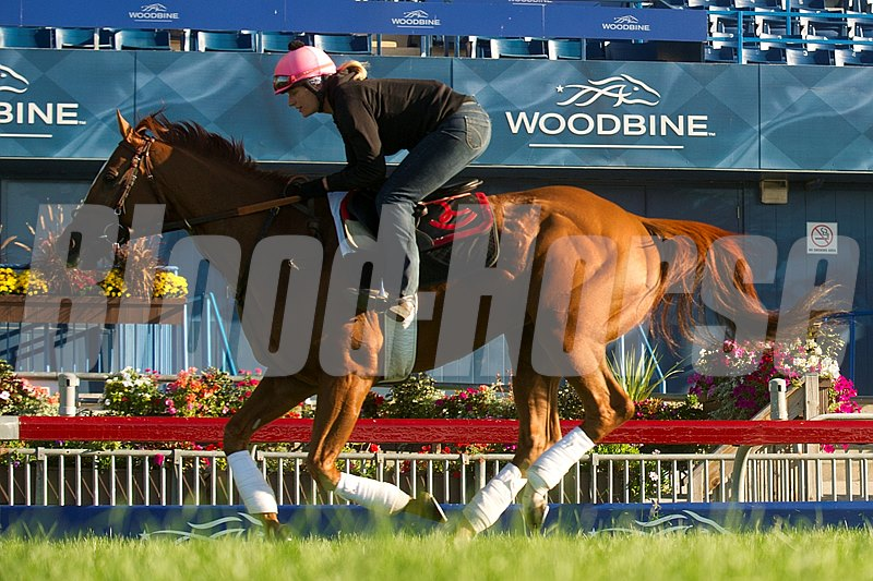 Wise Dan gallops over the E. P. Taylor turf course with exercise rider Ruth Schmidt.