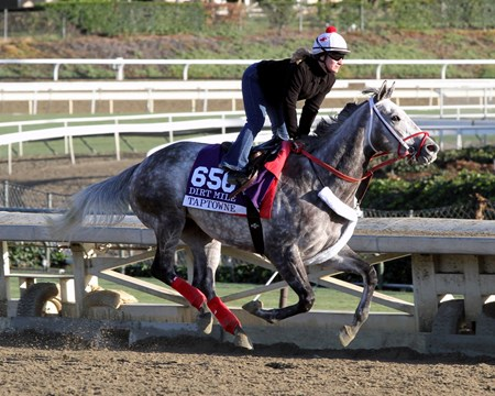 Taptowne on the track at Santa Anita Park on October 29, 2013. Photo By: Chad B. Harmon