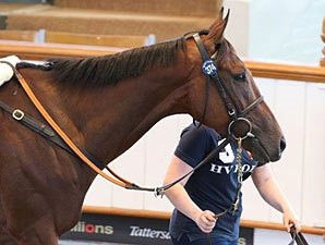Qatari Interests Boost Day 2 at Tattersalls