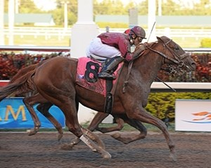 Ice Box wins the 2010 Florida Derby at Gulfstream Park.