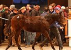 Sea The Stars Colt Leads Tattersalls Session