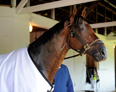 Caption:  Itsmyluckyday in his shedrow