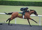 Bernardini Filly Shows Maturity in OBS Breeze