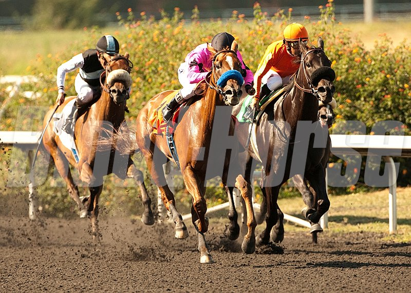Book Review and Rafael Bejarano win the Grade II $200,000 A Gleam Handicap  at Betfair Hollywood Park, Inglewood, CA.
