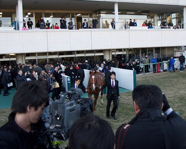 Orfevre's retirement celebration was a massive spectacle in Japan with much media coverage.