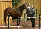 Ragtime Hope, Hip 835, sold for $675,000 on November 8.