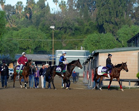 Caption:  Europeans to track, l-r, Veda, Flintshire, Anodin