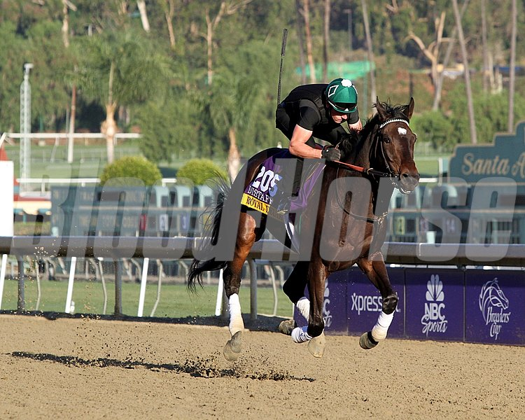 Royal Delta on the track at Santa Anita Park on October 30, 2013. Photo By: Chad B. Harmon