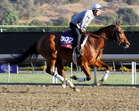 Little Mike on the track at Santa Anita Park on October 30, 2013. Photo By: Chad B. Harmon