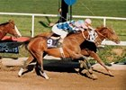 The 1987 Breeders' Cup was a battle of Kentucky Derby winners, with 1986 Derby winner Ferdinand prevailing by a nose over 1987 winner Alysheba.