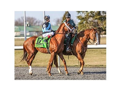 "Capo Bastone tries for his first stakes win in the Derby Trial Stakes (gr. III) Saturday, April 27 at Churchill Downs.<br><a target=""blank"" href=""http://photos.bloodhorse.com/AtTheRaces-1/at-the-races-2013/27257665_QgCqdh#!i=2475283358&k=4ztJZw7"">Order Th"