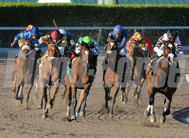 Final turns of the Grade II Sabin Stakes at Gulfstream Park.