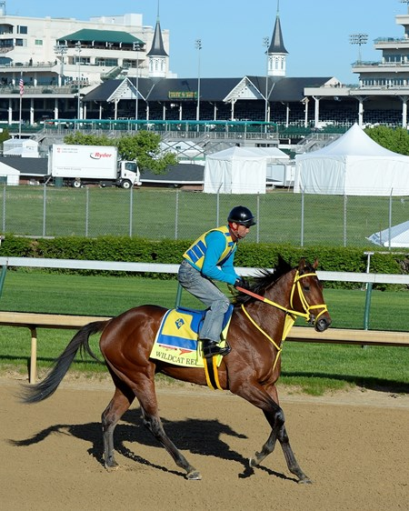 Caption: Wildcat Red pulling up after training.