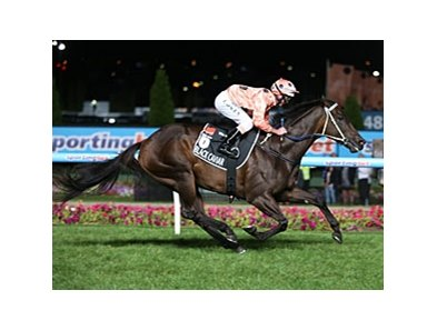 Black Caviar rolls home to win number 24 in the Hacer Group William Reid Stakes.