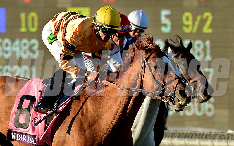 Wise Dan wins the Breeders' Cup Mile at Santa Anita.