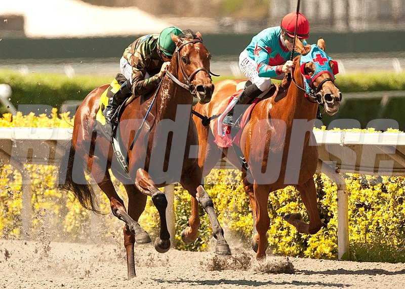 Gypsy Robin and jockey Mike Smith (left) win the $90,000 CERF Stakes at Del Mar Thoroughbred Club.