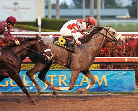 Winslow Homer captures the Holy Bull Stakes on 1/23/10 at Gulfstream Park. Ridden by Ramon Dominguez