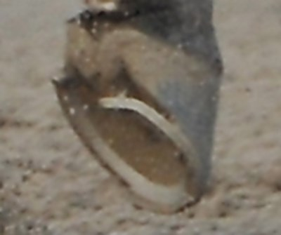 More detailed shot at the top of the stretch showing Big Brown's shoe.